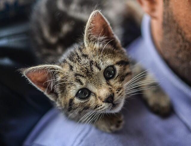 can cats eat blackberries