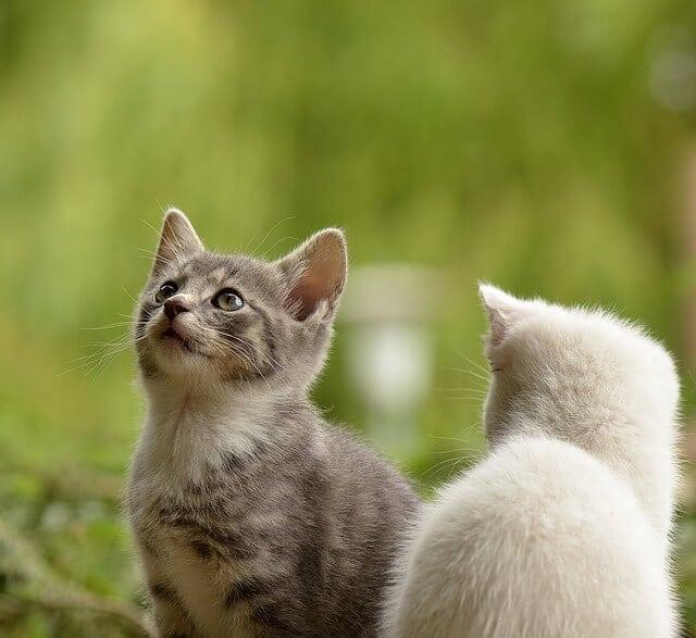 can cats eat potato peels