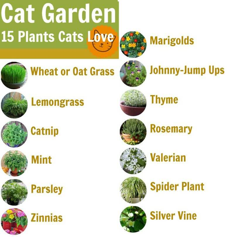 plants for cats