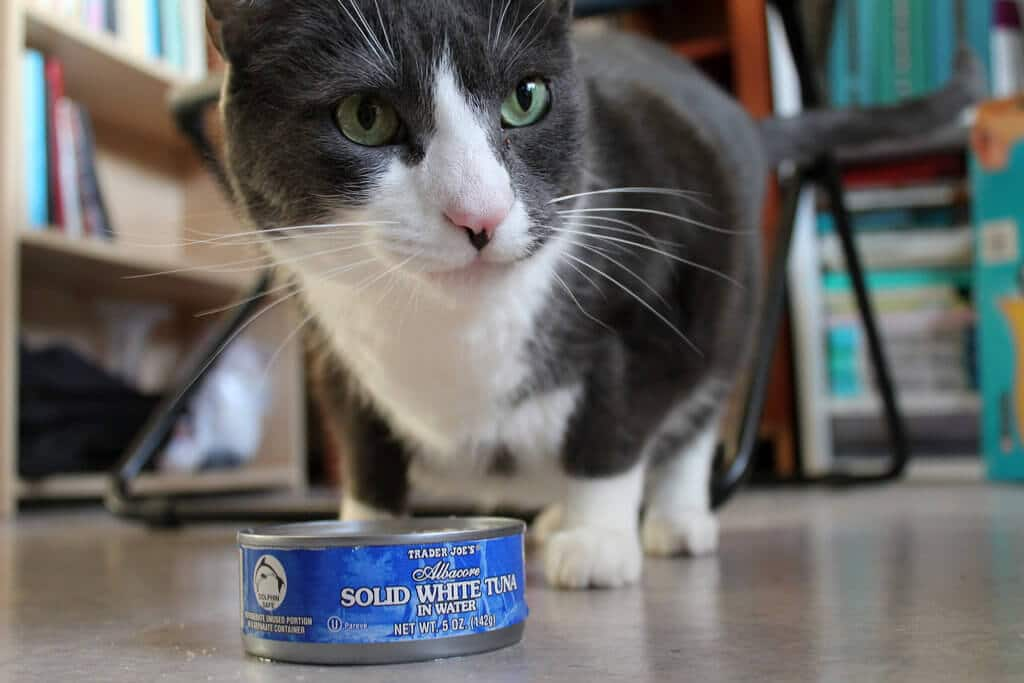 can cats and dogs eat raw salmon
