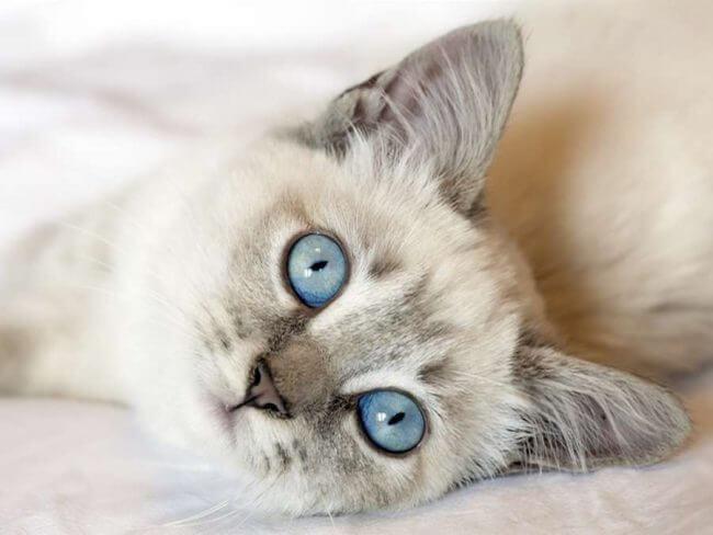 can cats eat probiotic yogurt