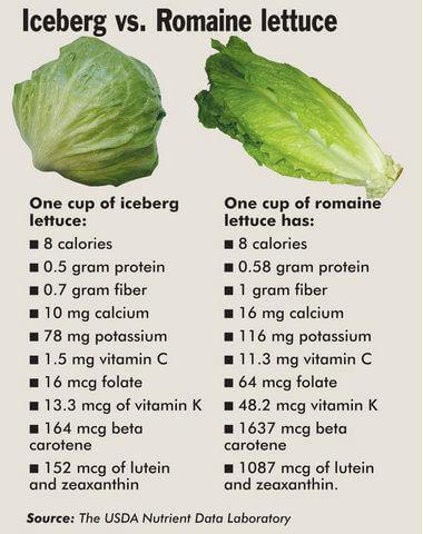 can cats eat romaine lettuce