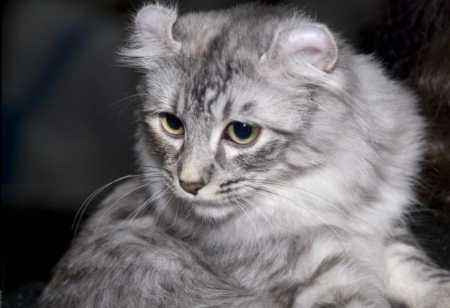 declawing cats in ontario