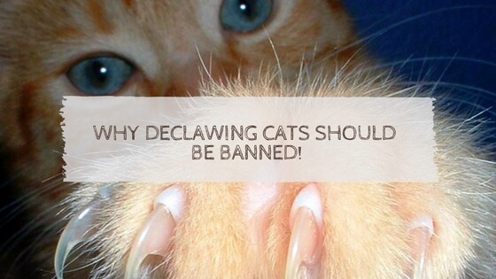 declawing cats should be banned