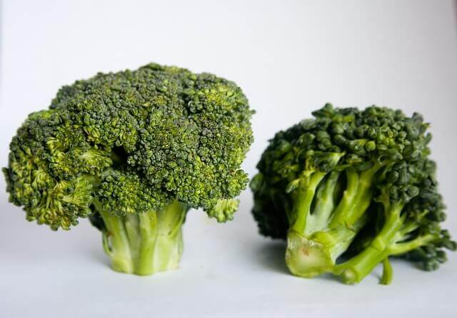 can cats eat steamed broccoli