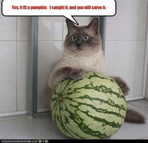 what fruits can cats eat