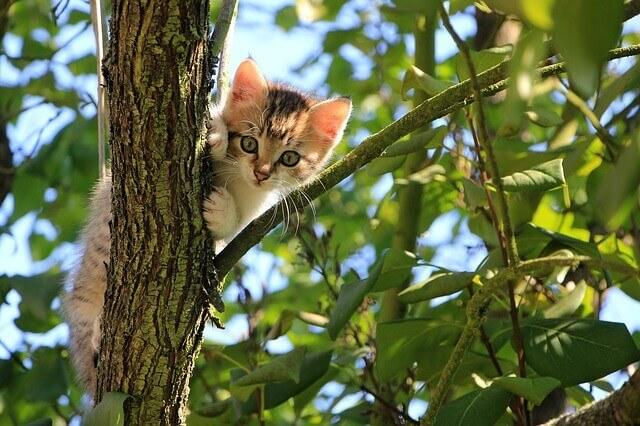 can kittens eat yogurt