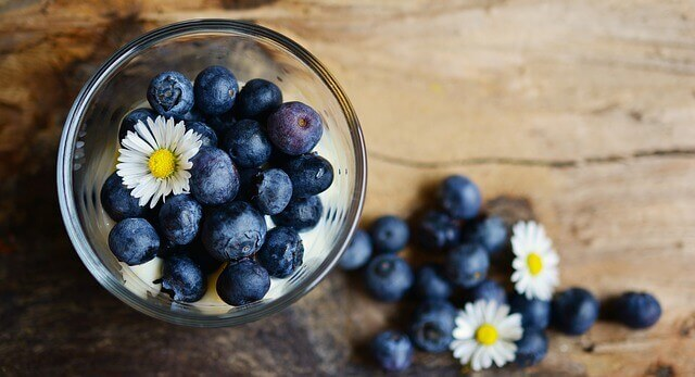 is blueberry poison for cats