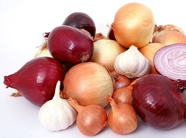 onion toxicity in cats
